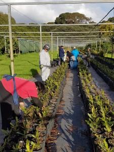 Planting Macadamias Torere Macadamias