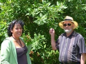 Macadamia Trees in Blossom - Torere Macadamias