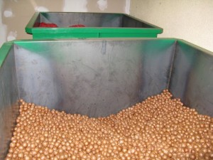 Growing the macadamia industry - Torere Macadamias